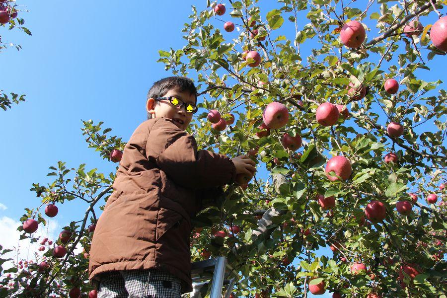 リンゴ狩り その3