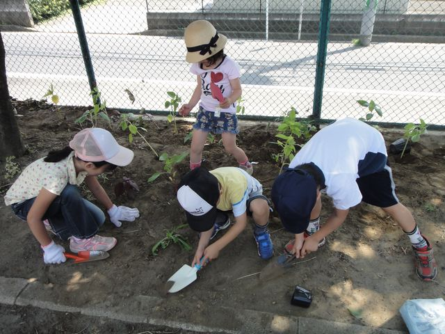 花を植えよう大作戦