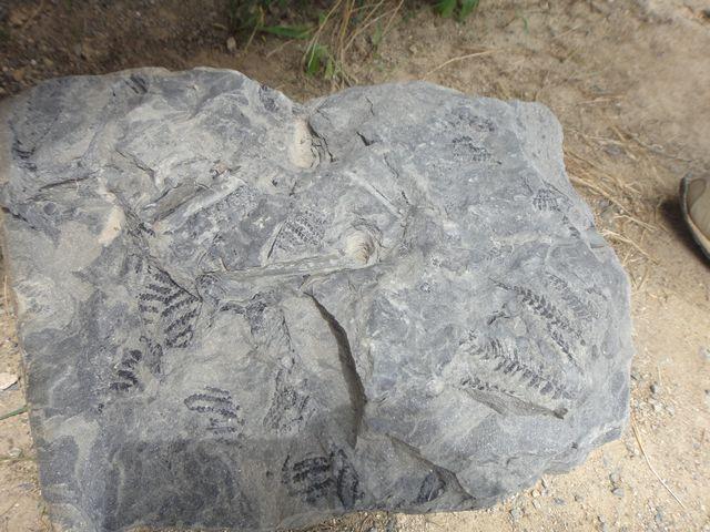 恐竜化石発掘体験 その3