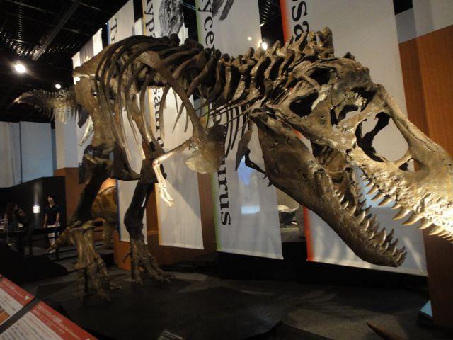 福井県立恐竜博物館 その1