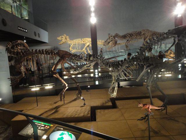 福井県立恐竜博物館 その5