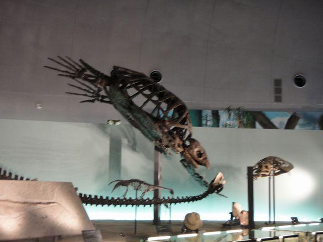 福井県立恐竜博物館 その6