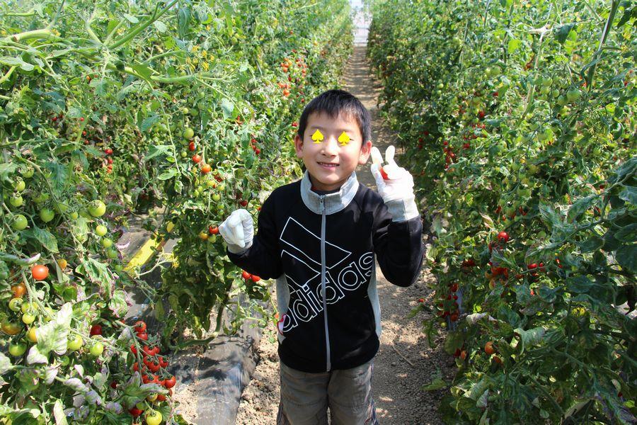 フルーツトマト狩り その1