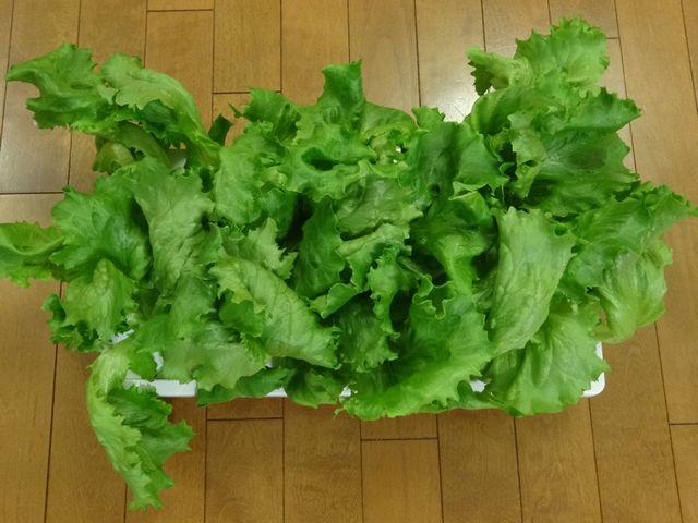 サラダ その1