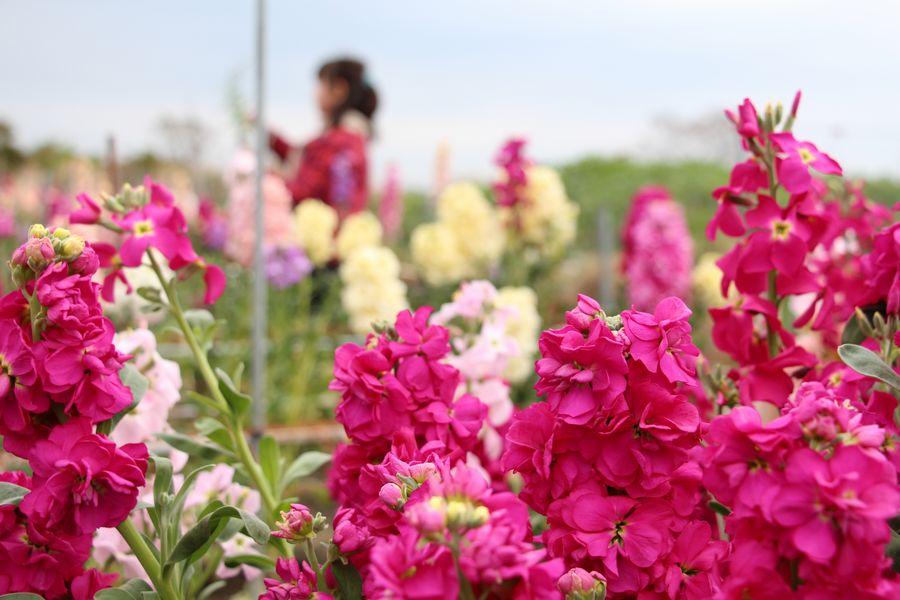 花摘み その3