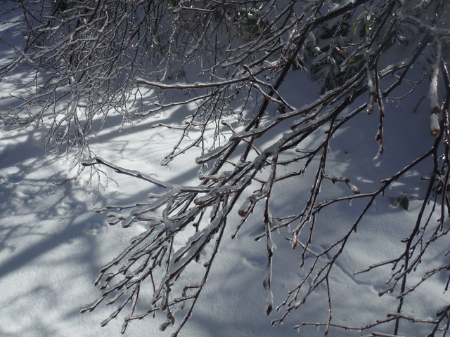 樹氷? その2