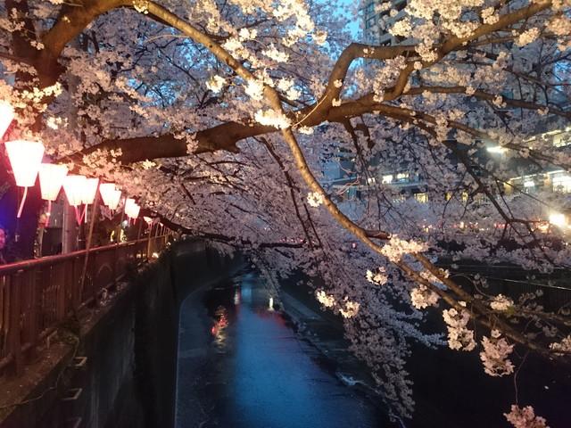 夜桜 その1
