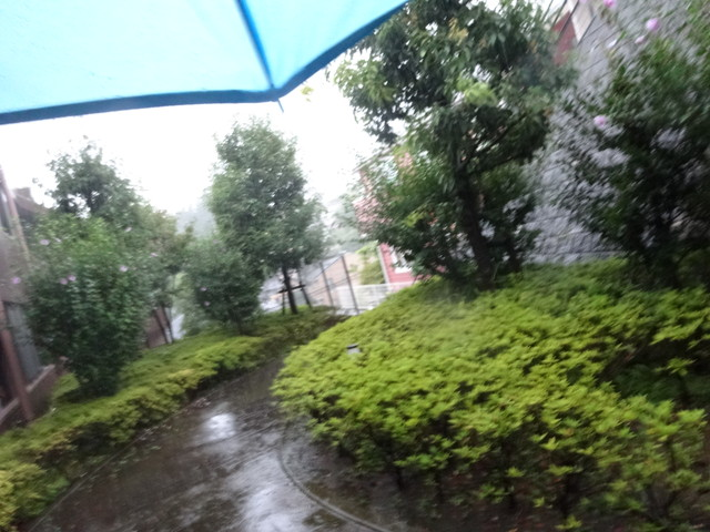 大雨 その1