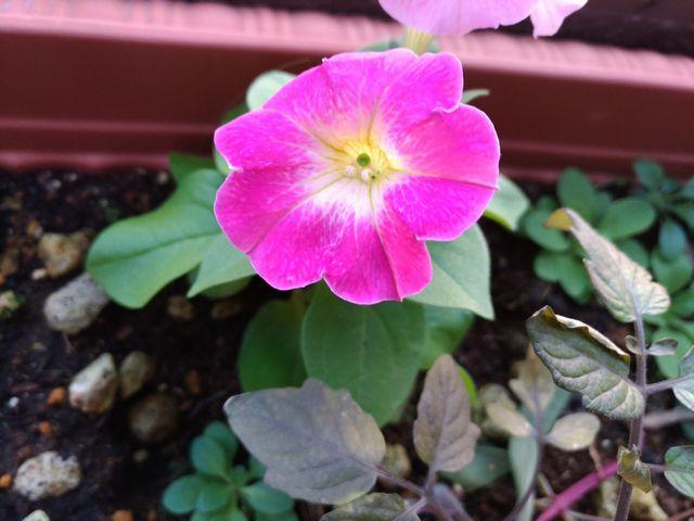 お花 その2