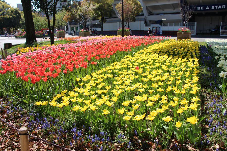 横浜公園 その1