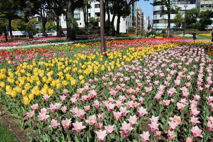 横浜公園 その2