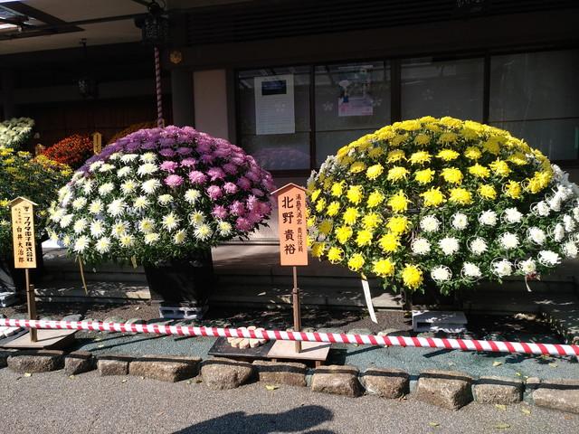 菊祭り その1