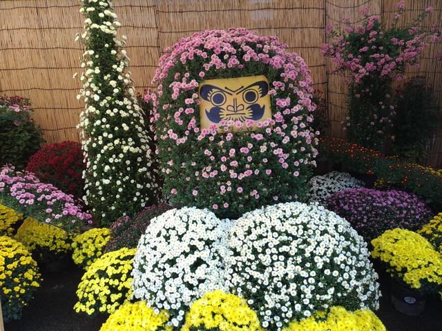 菊祭り その3