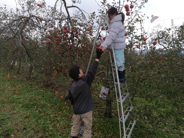 りんご狩り その2