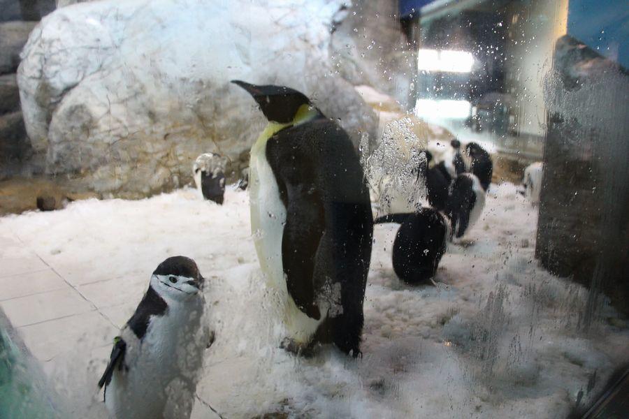 ペンギン その3