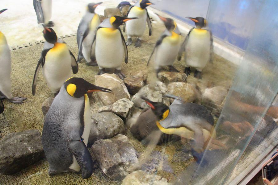 ペンギン その4