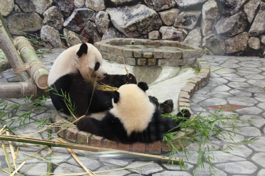 パンダ その2