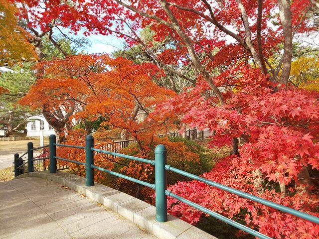 函館公園 その2