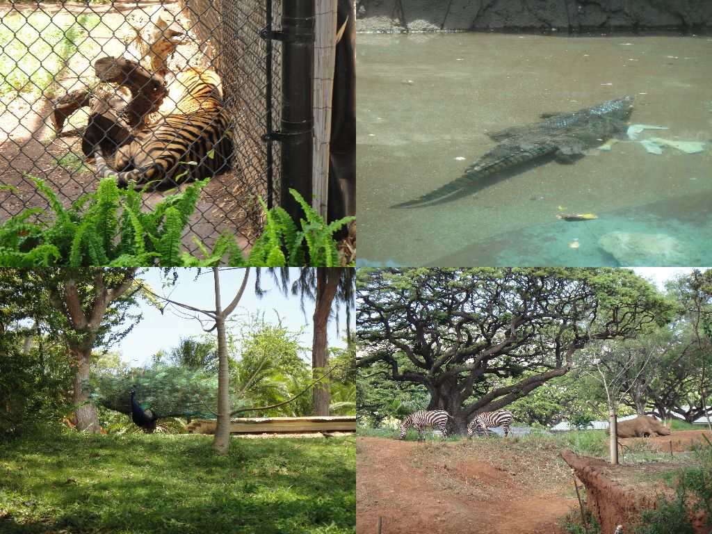 ホノルル動物園 その5