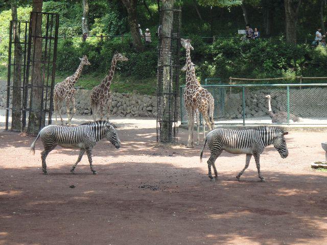 多摩動物公園 その6