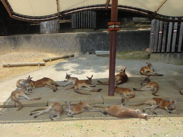 多摩動物公園 その8