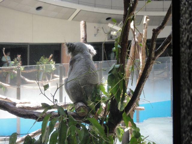 多摩動物公園 その9