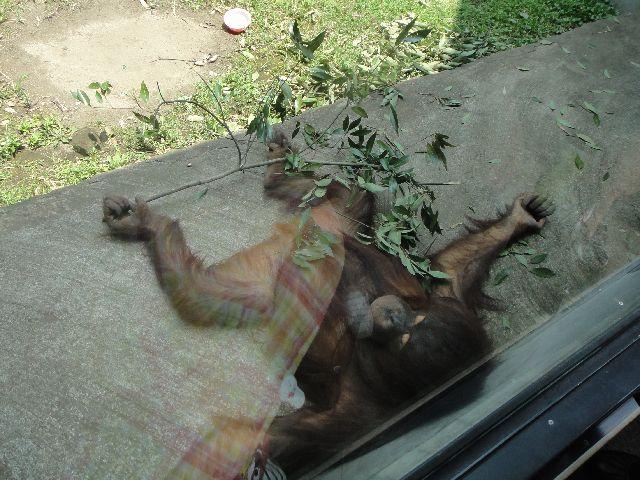 多摩動物公園 その10