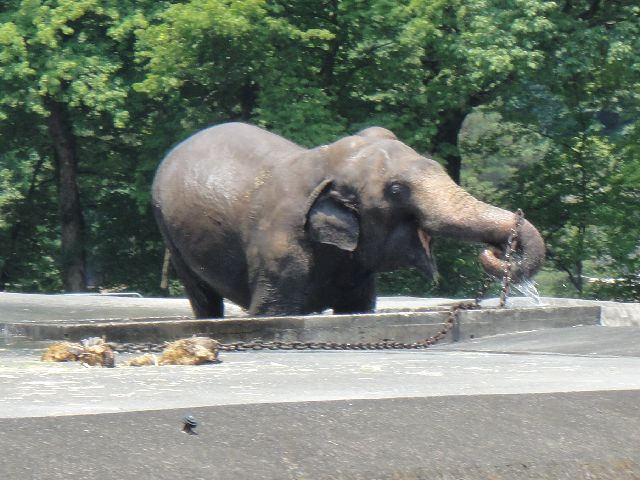 多摩動物公園 その11