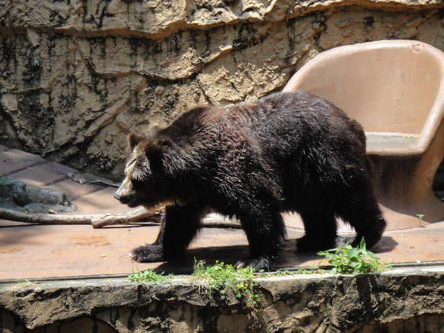 多摩動物公園 その12