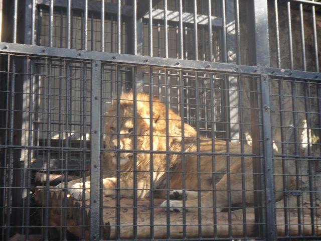 野毛山動物園 その2