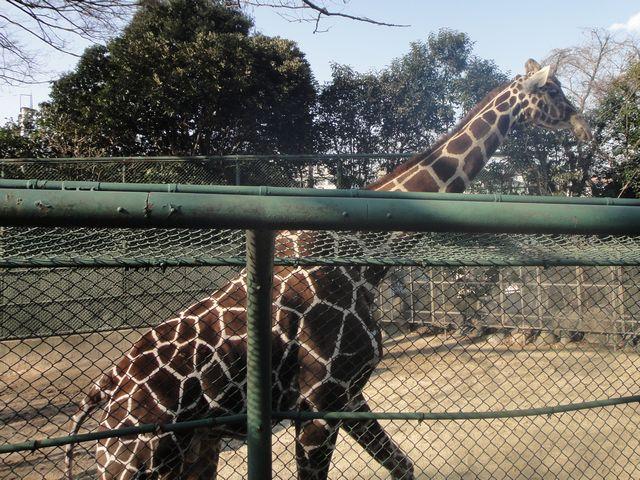 野毛山動物園 その3
