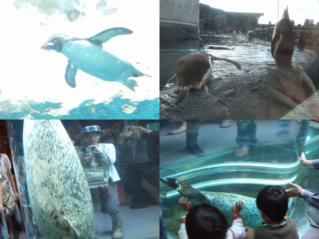 旭山動物園 その1