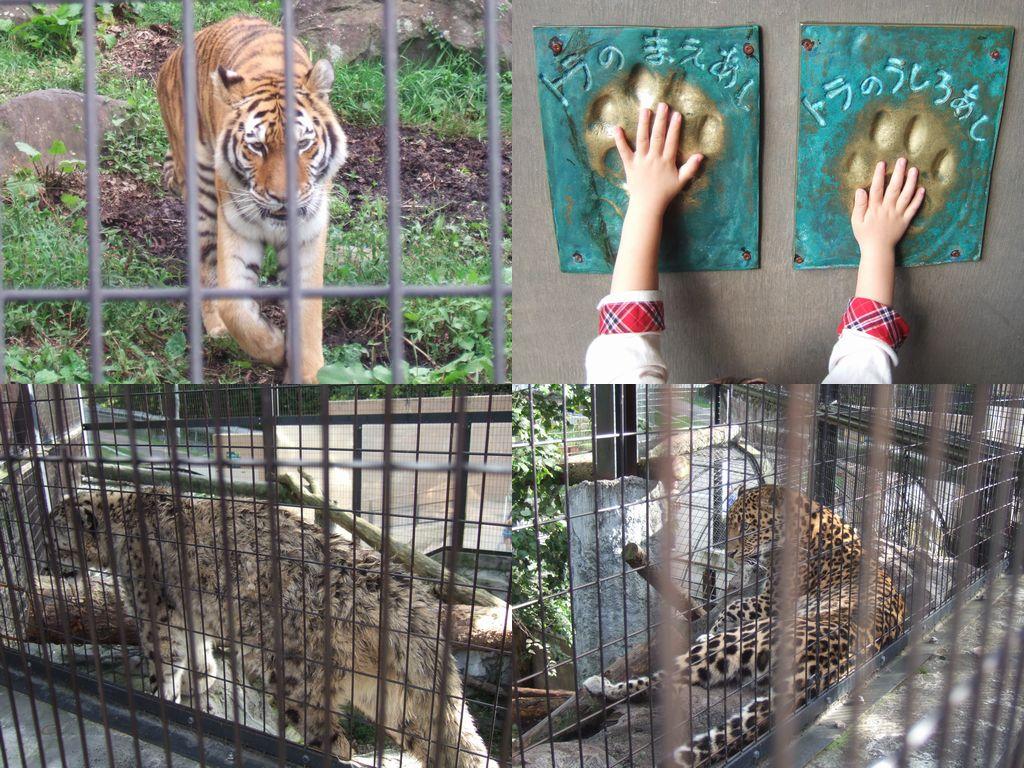旭山動物園 その2