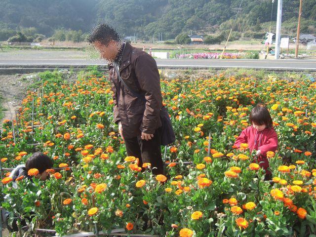 白間津のお花畑 その3