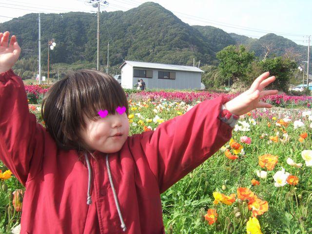 白間津のお花畑 その2
