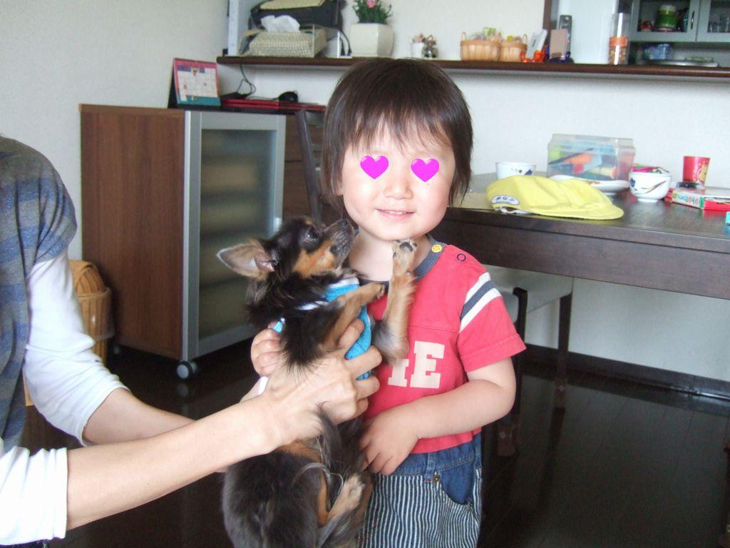 《いぬ》と犬